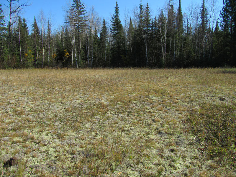 Ely BWCA Spruce Road Mining Exploration Site